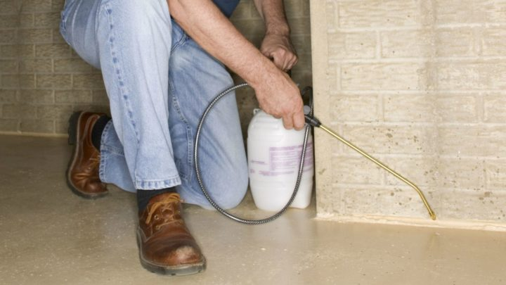Hiring a Pest Control Company for Your House